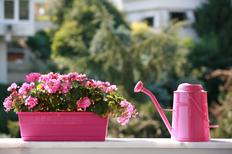 Bunte Blumen Bringen Den Fruhling Auf Den Balkon Platinnetz