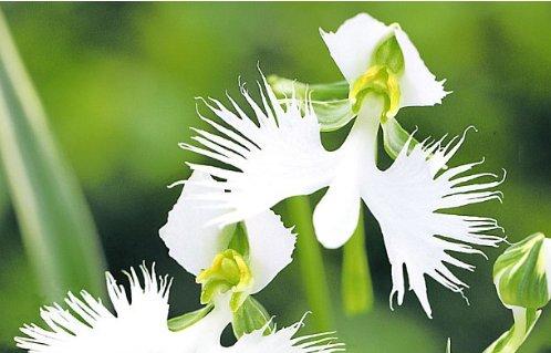 Außergewöhnliche Pflanzenraritäten Von Baldur Garten Platinnetz